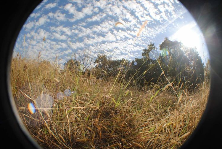 Nature Fisheye Lens Blue Sky And Clouds Grassland Under Sunlight Fisheye Sunshine Sunny Atthelake Natural The Great Outdoors With Adobe