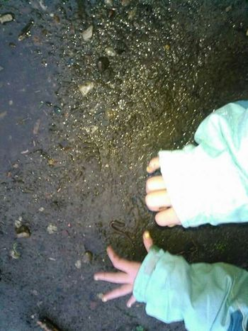 Playing In The Rain Playing In Puddles worm hunting