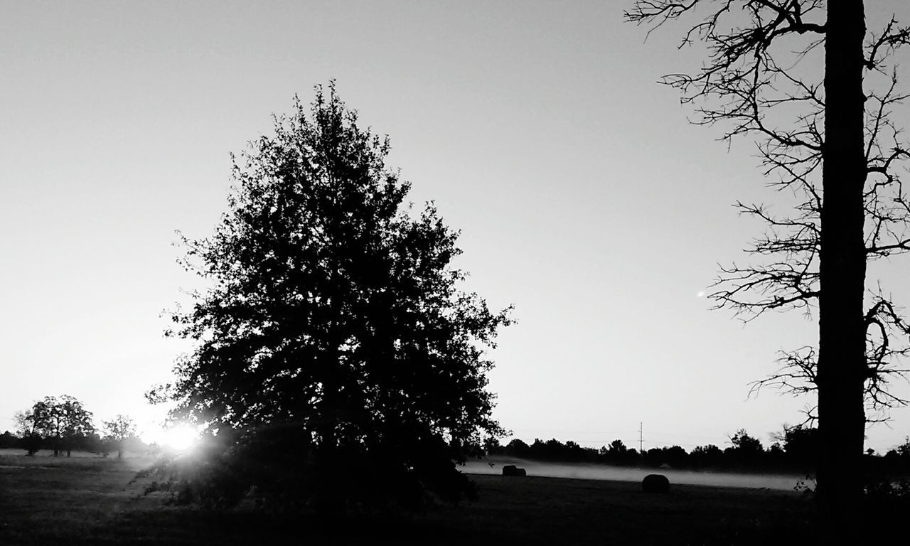tree, silhouette, clear sky, nature, tranquility, growth, landscape, tranquil scene, real people, scenics, beauty in nature, outdoors, sky, day, branch, tree trunk, men, people