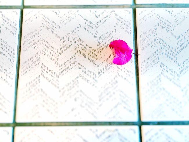 18 Years Ago I Want To See Again Hide Pink Flower Petal Japan Japanese  Iphonegallery EyeEm Gallery https://youtu.be/F6g6IO5V3cU