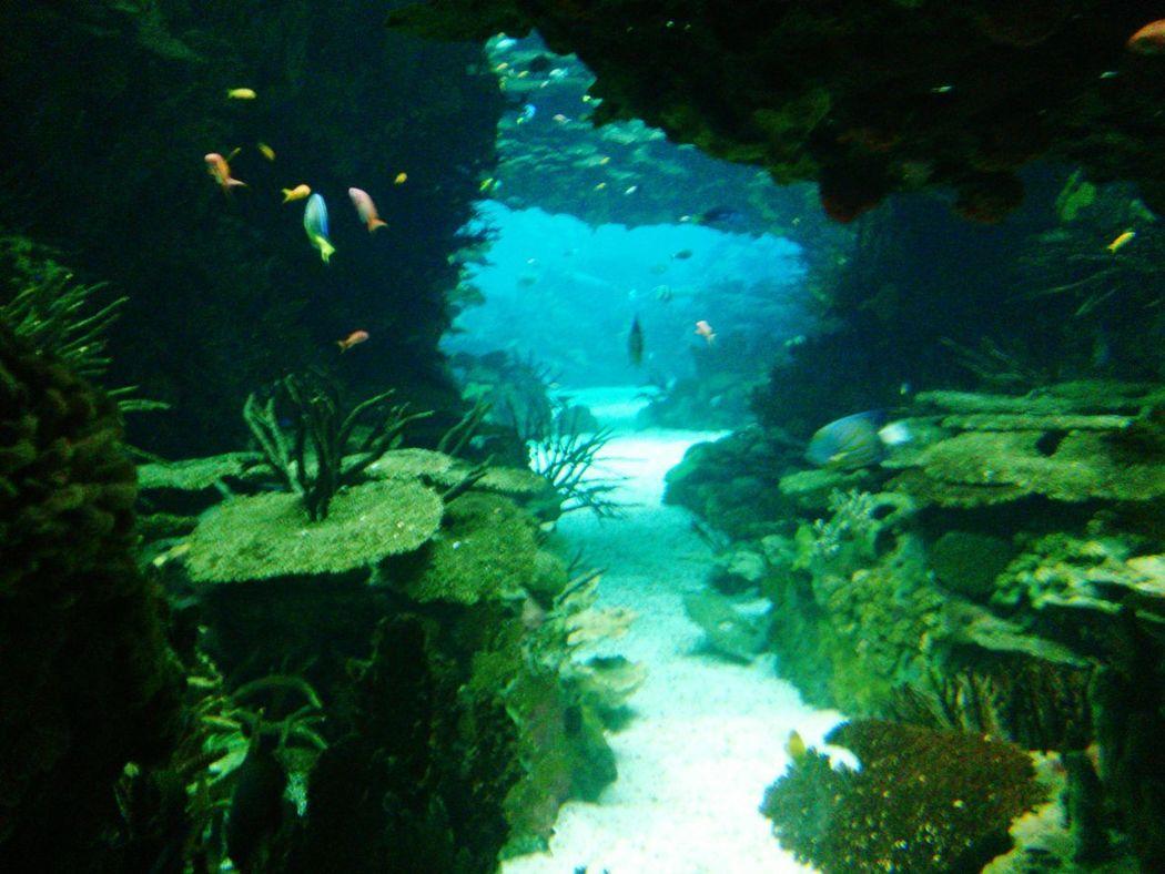 Underwater Tunnel Oceanário De Lisboa Lisboa Lisbon