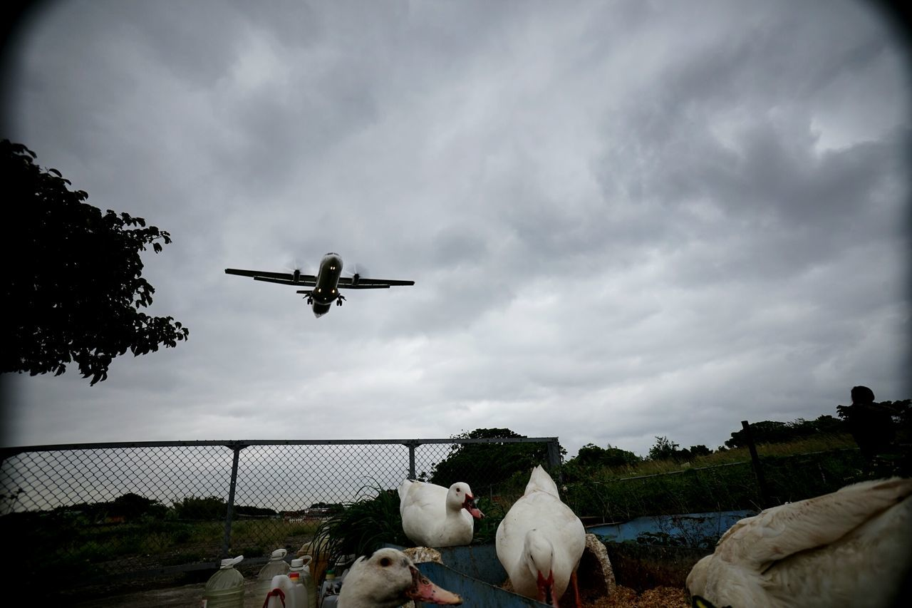 Flying Airplane Transportation Sky Adventure Air Vehicle Journey Flightclub Flight The Drive Dreaming Ducks