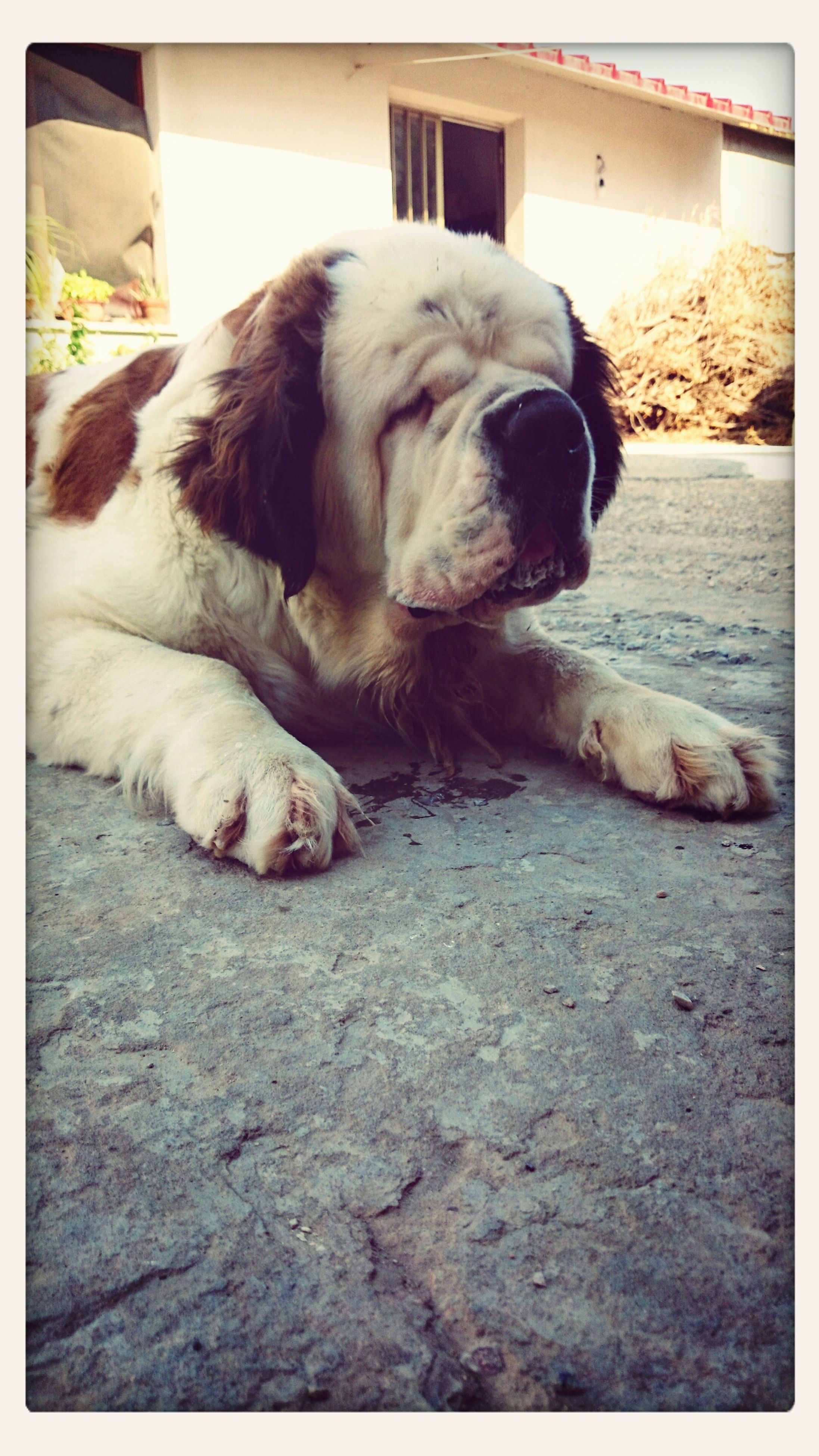 domestic animals, animal themes, pets, one animal, mammal, transfer print, dog, auto post production filter, relaxation, sleeping, resting, lying down, zoology, full length, animal, no people, vertebrate, two animals, indoors, high angle view