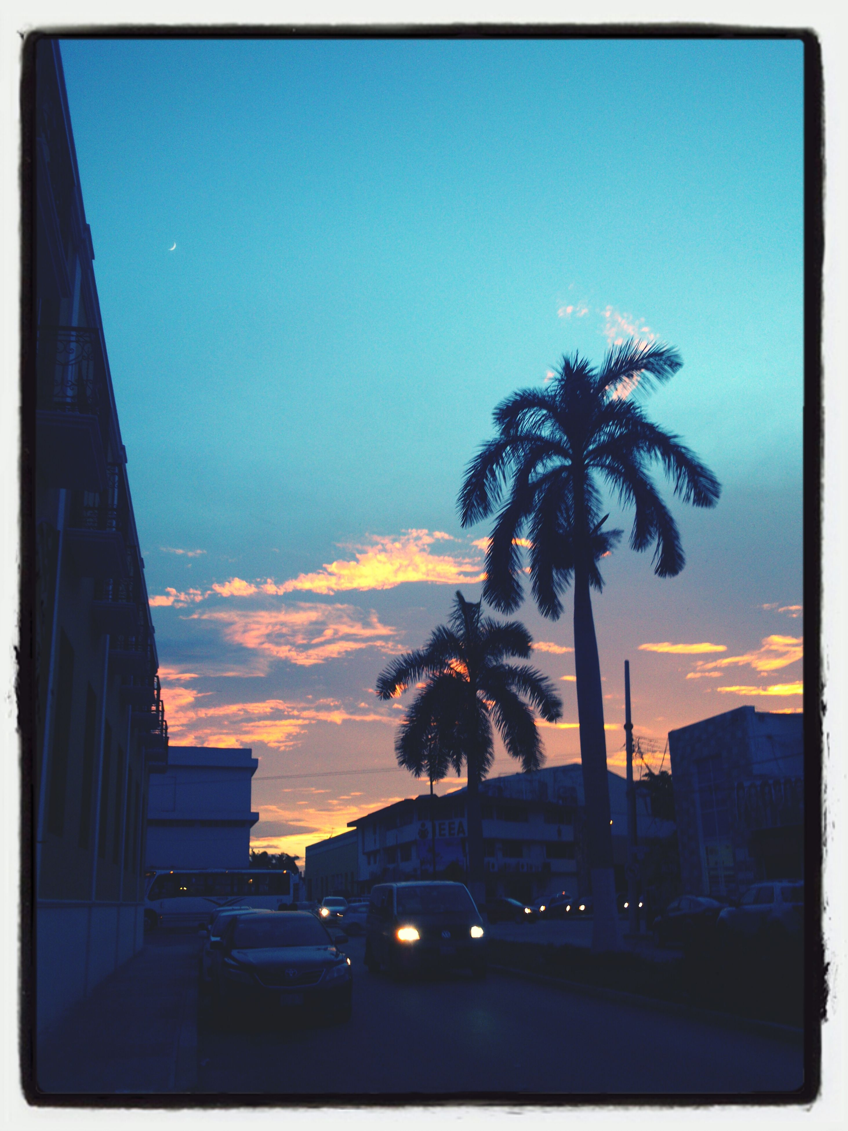 sunset, building exterior, architecture, tree, palm tree, built structure, sky, silhouette, transfer print, city, car, auto post production filter, transportation, orange color, land vehicle, cloud - sky, road, tall - high, low angle view, growth