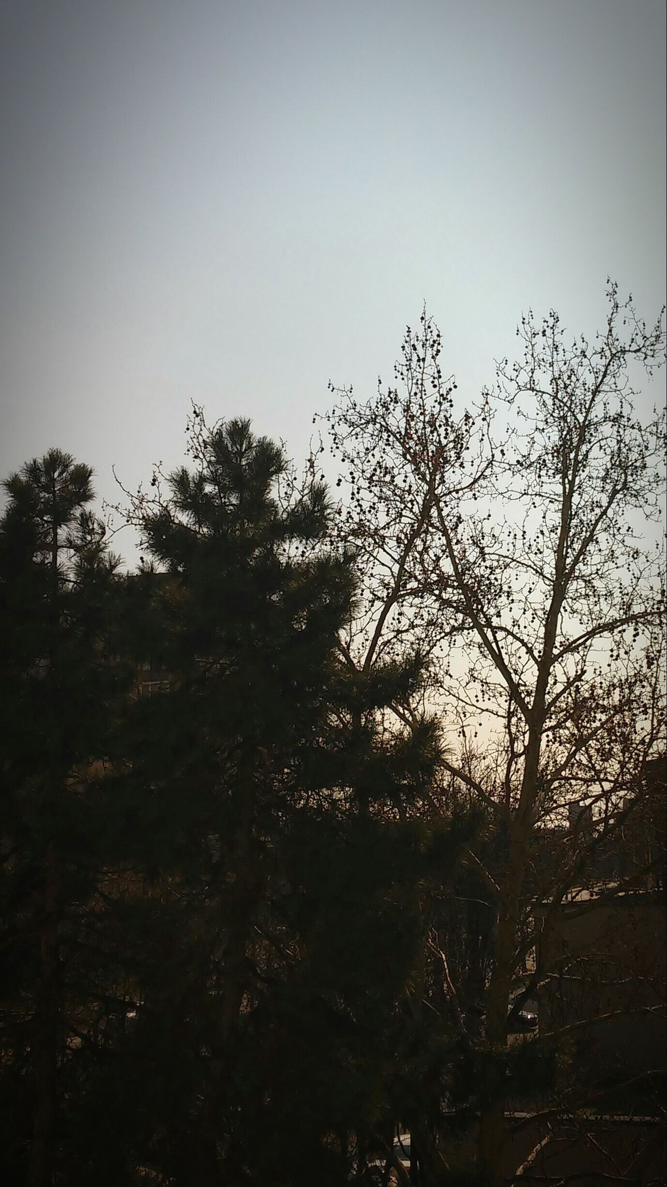 tree, clear sky, copy space, growth, silhouette, branch, nature, tranquility, low angle view, beauty in nature, tranquil scene, sky, dusk, bare tree, outdoors, scenics, no people, plant, field, day