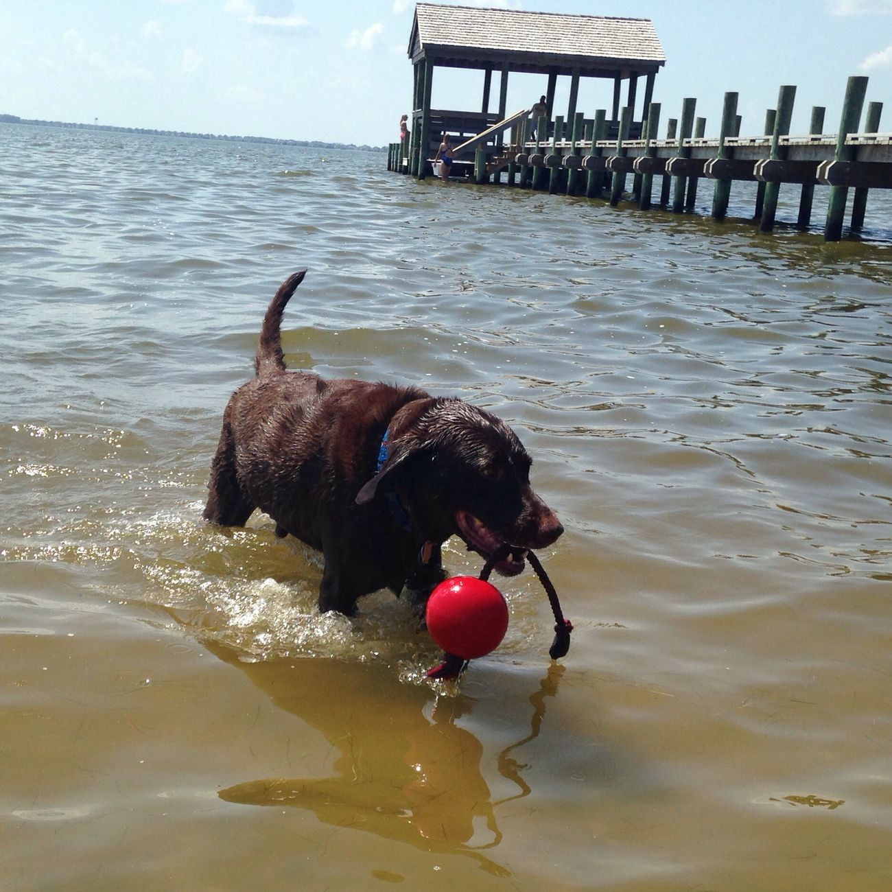 Retrieving. Cooldude Smartpup Boysie OBX14