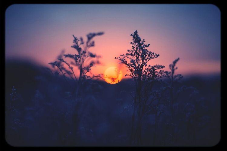 yesterdays sunset in the back yard. <3 beautiful :)