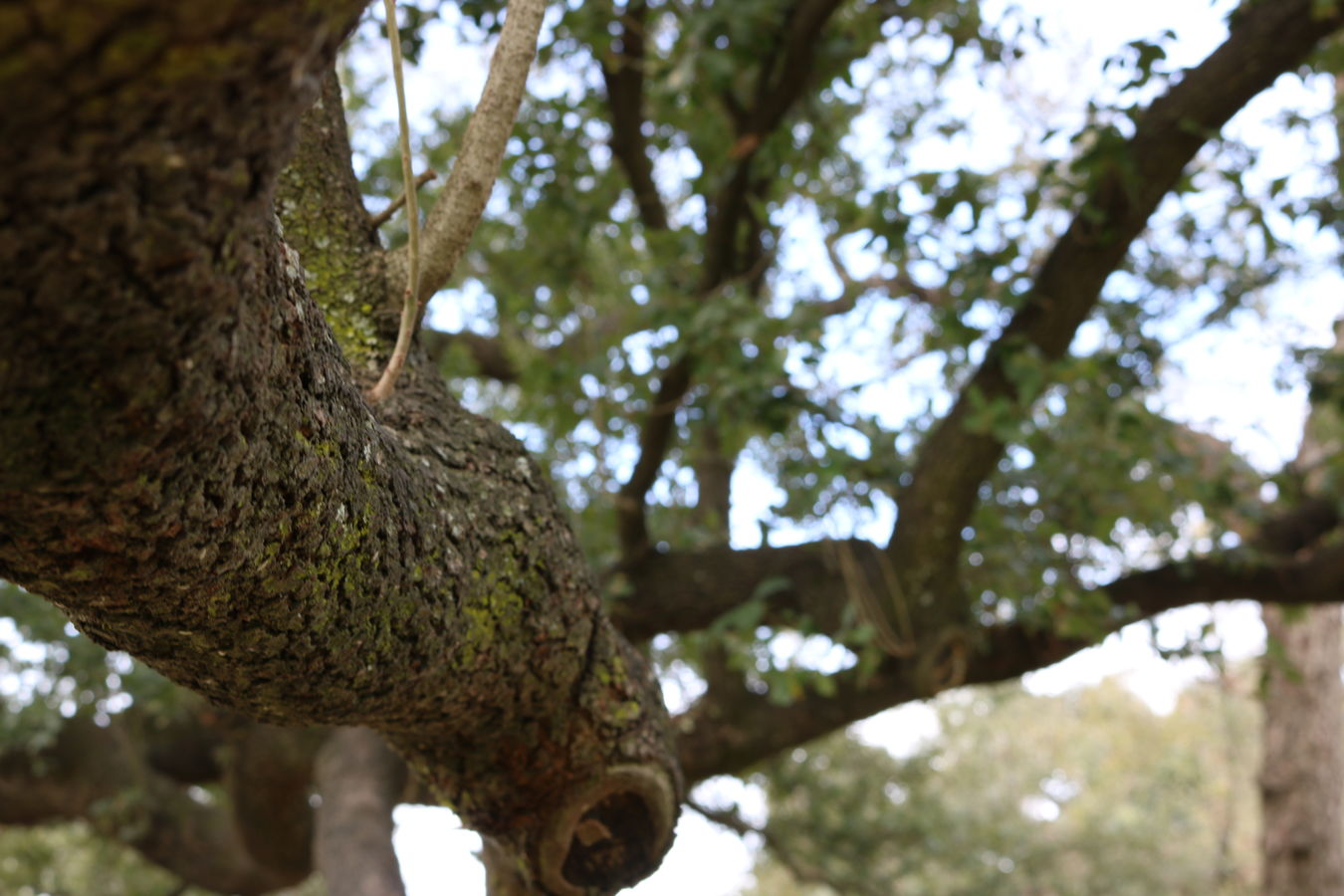 Tree Low Angle View Tree Trunk Branch Sky Nature No People Growth Day Textured  Outdoors Animals In The Wild Close-up Animal Themes Perching Woodpecker No Filter Beauty In Nature Tree Park Bark Park Trees Shallow Depth Of Field Textured  Taking Photos