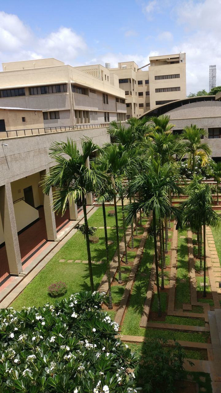 growth, architecture, building exterior, plant, built structure, balcony, palm tree, no people, outdoors, nature, city, tree, sky, day