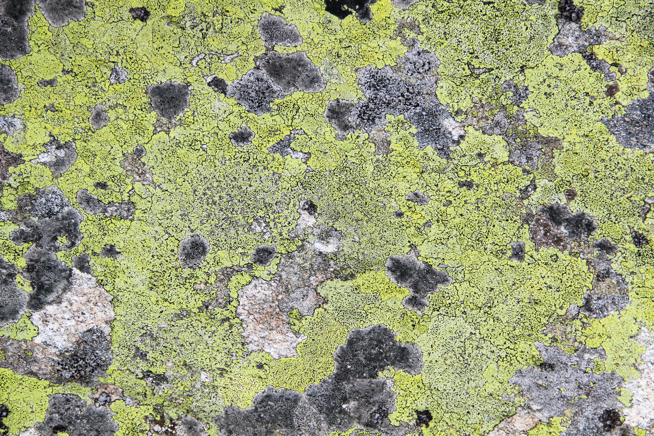 camouflage A Rock Abstract Camouflage Color Colored Spots Green And Gray Green Color Haworthia Leaves Leaves_collection Natural Pattern Lichen No People Pattern Pattern Pieces Patterns In Nature Texture