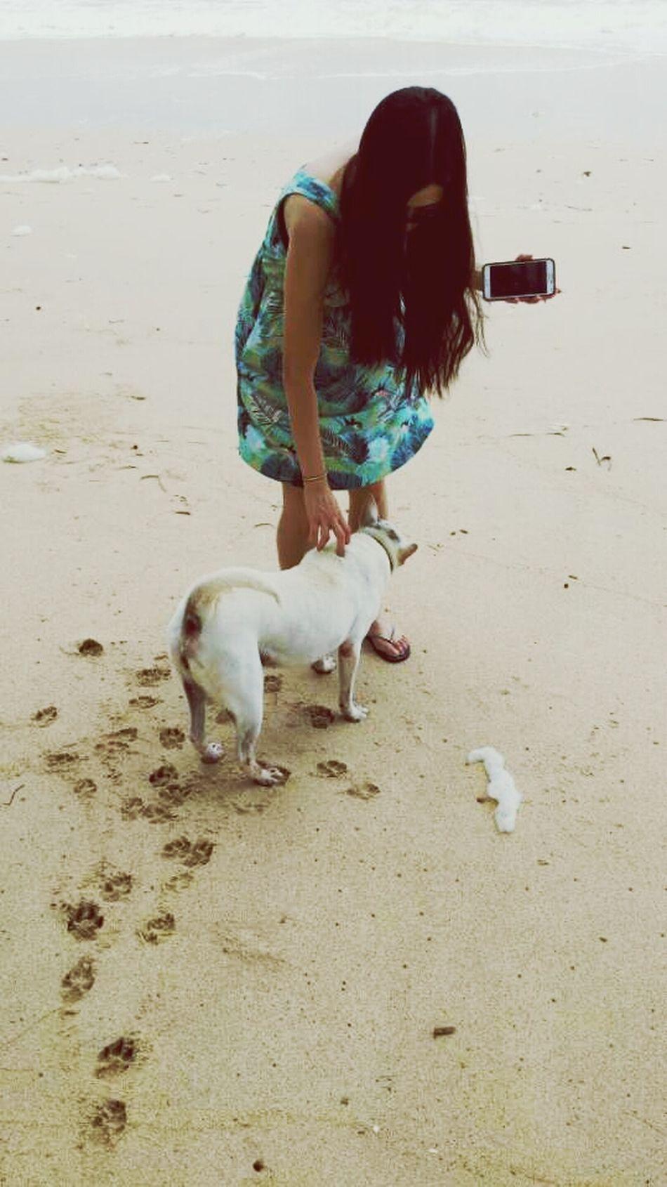 Beach's Dog Enjoying The Sun Details Of My Life Dog♡ ?????