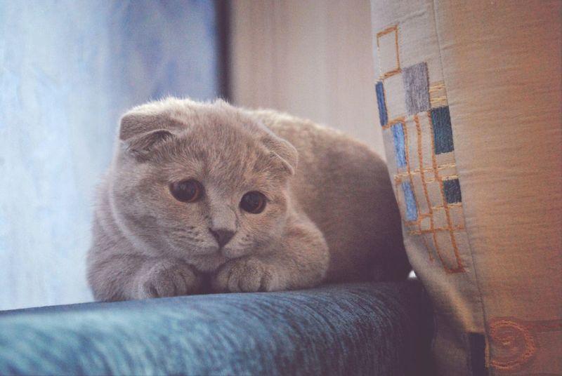 little hunter..Darling Eyem Cute Cats