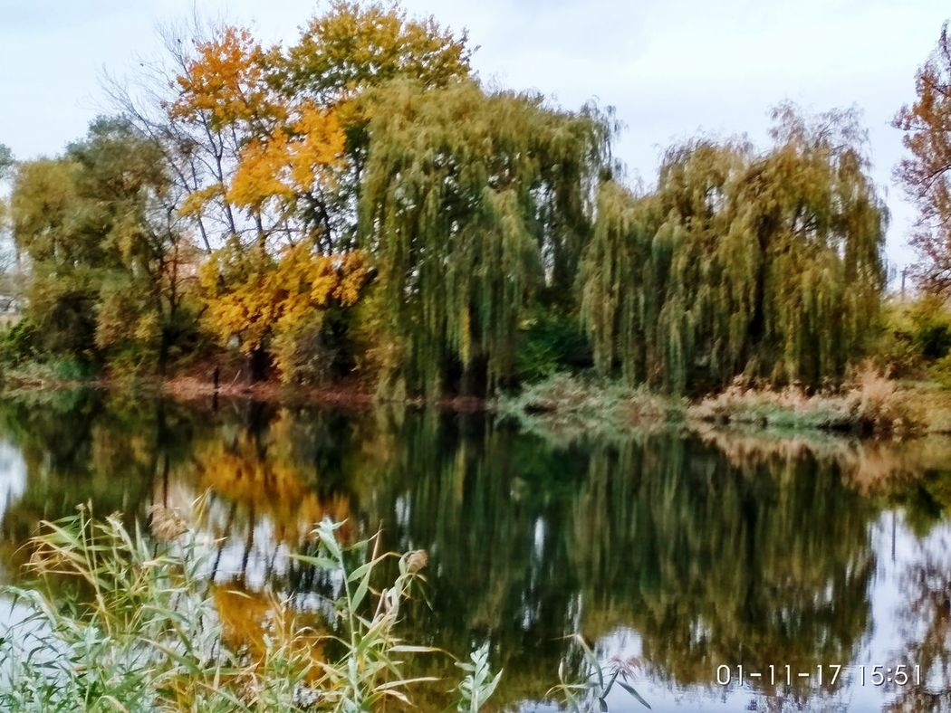 Autumn Autumn Colors Autumn Leaves Autumn Collection Beauty In Nature Tree Nature Lake Forest Landscape Autumn Reflection Water Scenics Tranquil Scene Sky Day Outdoors Tranquility Growth No People