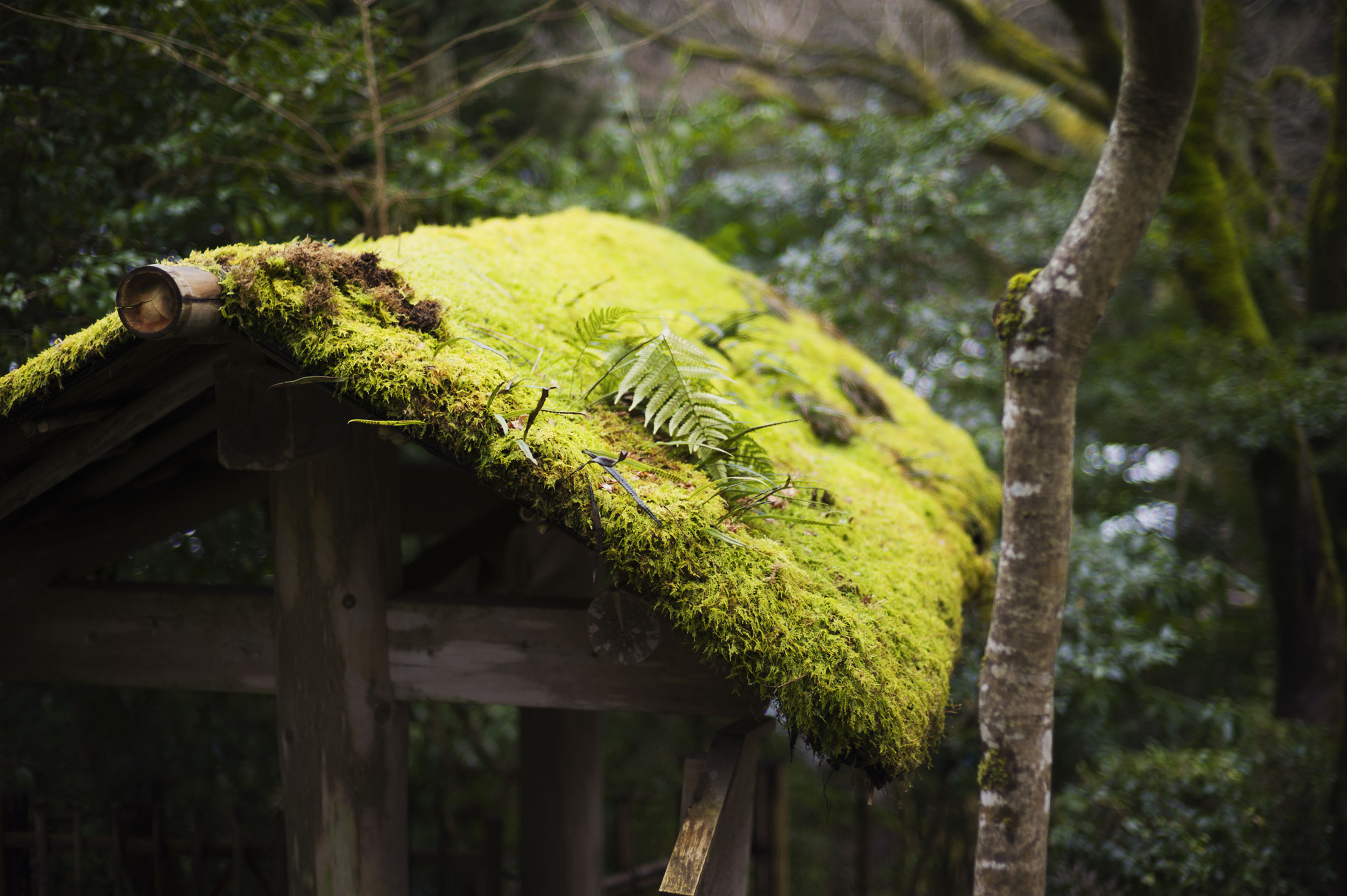 tree, wood - material, focus on foreground, growth, tree trunk, green color, nature, forest, branch, close-up, plant, moss, outdoors, fence, day, wooden, no people, wood, tranquility, selective focus