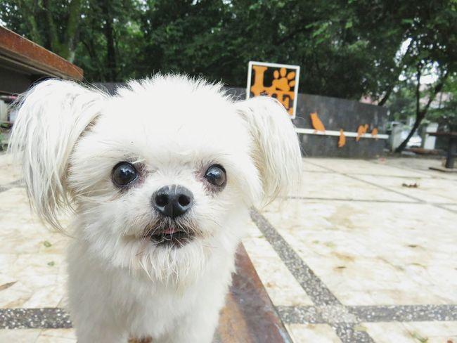At the pet park Dog Dog Love Dog Walking Park At The Park Pets Pet Park