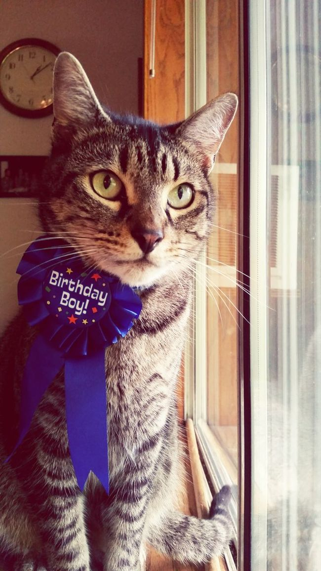 Birthdayboy Kitty Birthdaycat HappyBirthday