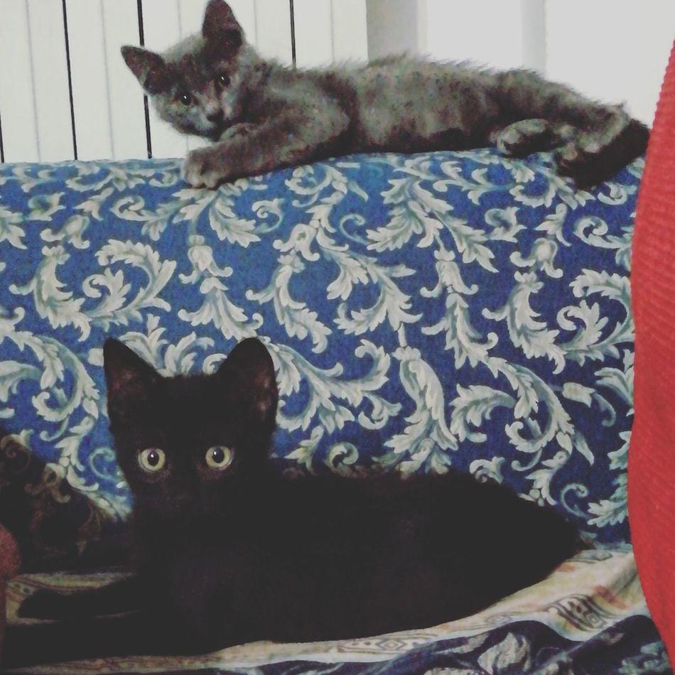 Gatti Cat Cats Black Gray Blackandgray First Eyeem Photo