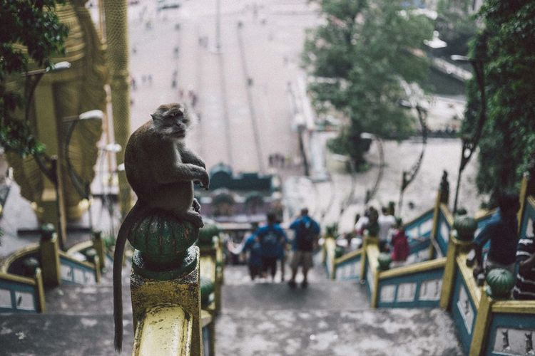 Monkey Business Monkey Monkeys Enjoying Life Hello World EyeEmMalaysia Streetphotography Traveling Travel Travel Photography