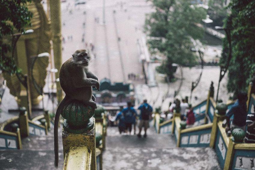 Monkey Business Monkey Monkeys Enjoying Life Hello World EyeEmMalaysia Streetphotography Traveling Travel Travel Photography
