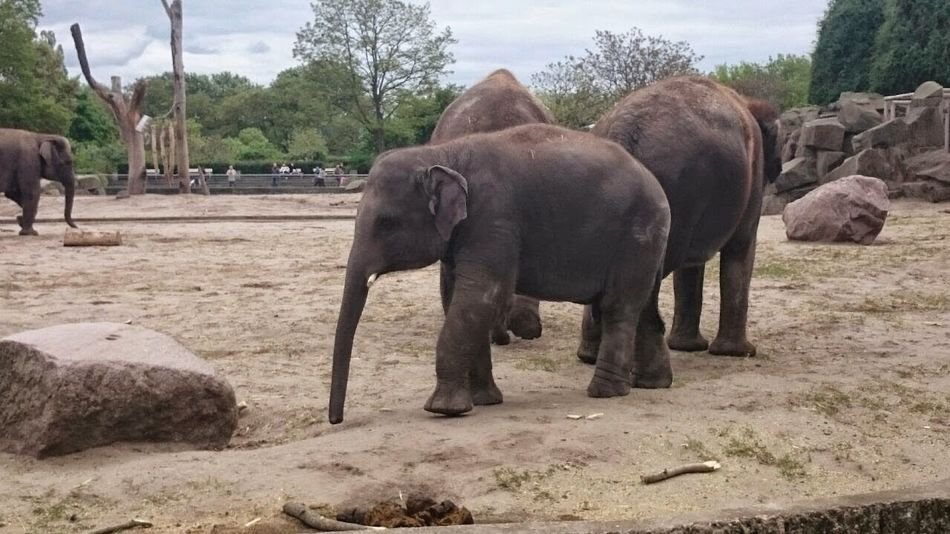 Elephant Animal Themes Tree Animals In The Wild Indian Elephant Animal Wildlife