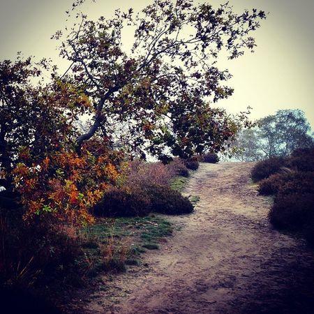 Heath Arcen Colors Nature Trails Trees Autumn NL Limburg walk Fall Holland orange