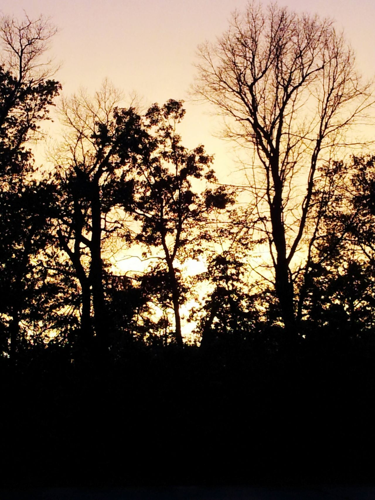 Shadow Sunset Sunset Golden Sunset Backlit Trees