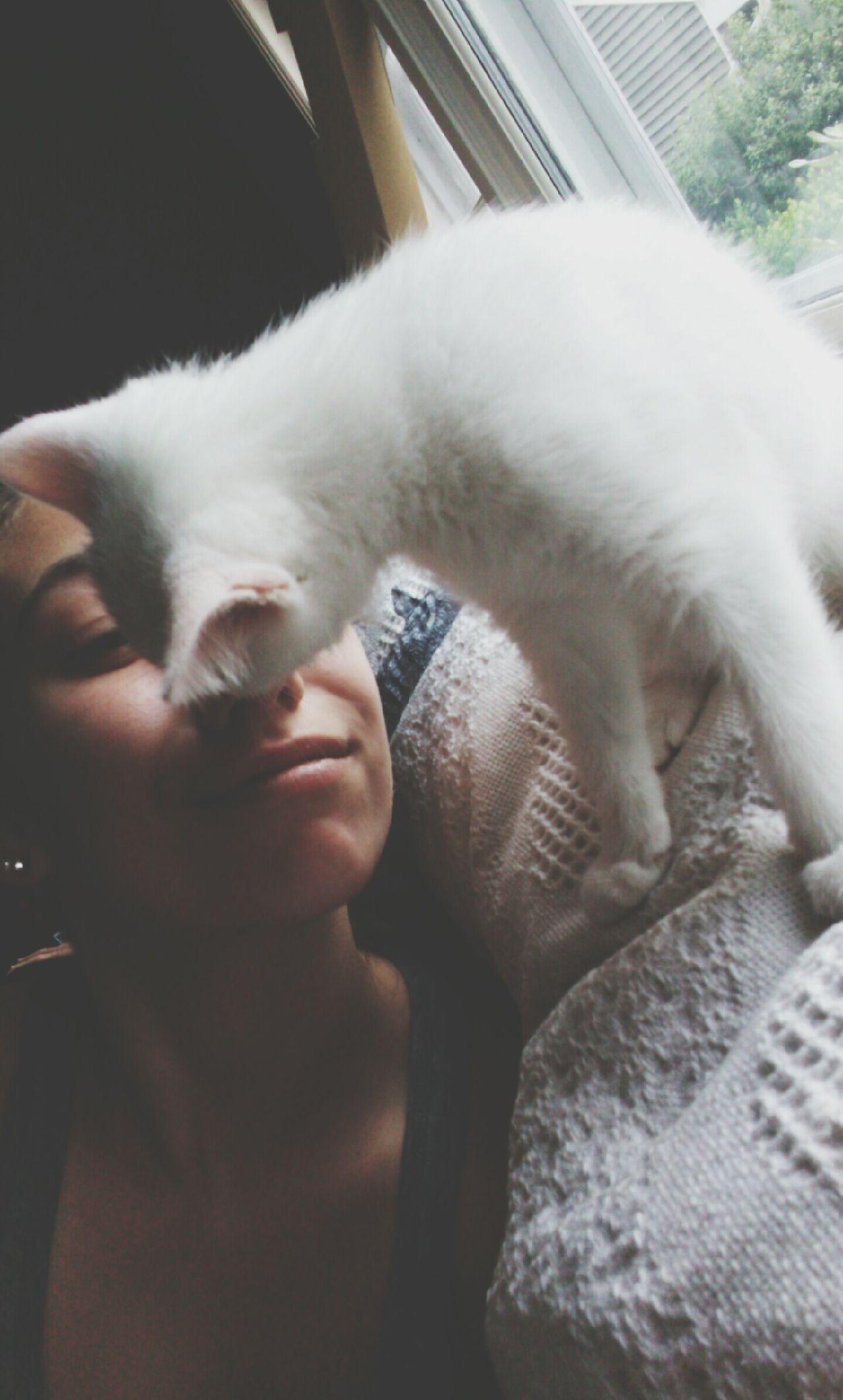 Kittykisses Kitty Kitty Love
