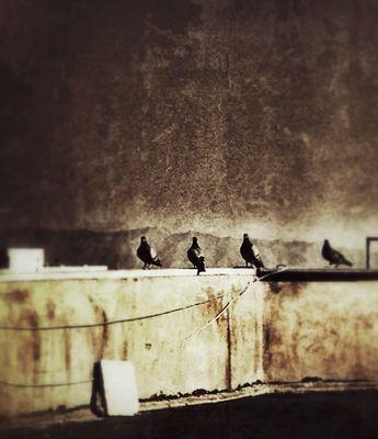 Photo by شمیم سامانی