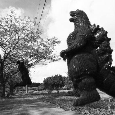 Today's Levitation no app!! #levitation#levitate#levitating #levitasihore#levitasi#moonleap #jump#whpjumpstagram#jumpstagram#me#japan#shadow#grasslevelseries#webstagram#instagram #photooftheday #instadaily #instagood#igers#follow#picoftheday#godzilla Monoart Levitating Me Follow Godzilla Bw_lover Blackandwhite Bw_society Sky Igers Shadow Jumpstagram Funny Instagood Jump Webstagram Levitation Instadaily Japan Grasslevelseries Bw Moonleap Photooftheday Whpjumpstagram Skyporn Levitate Instagram Levitasi Picoftheday Levitasihore