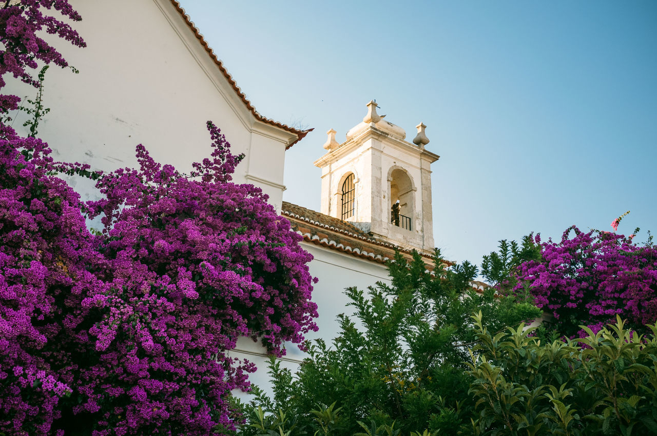 Architecture Beauty In Nature Blooming Blossom Blue Built Structure Day Flower Fragility Freshness Growth In Bloom Lisboa Lisbon Low Angle View Nature No People Outdoors Pink Color Plant Sky Tourism Travel Destinations Tree