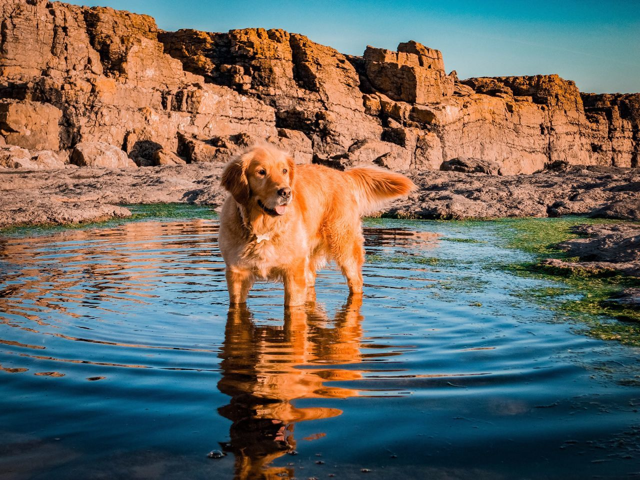 dog, water, one animal, pets, waterfront, mammal, rock - object, domestic animals, animal themes, rock formation, outdoors, day, lake, nature, full length, beauty in nature, no people, retriever