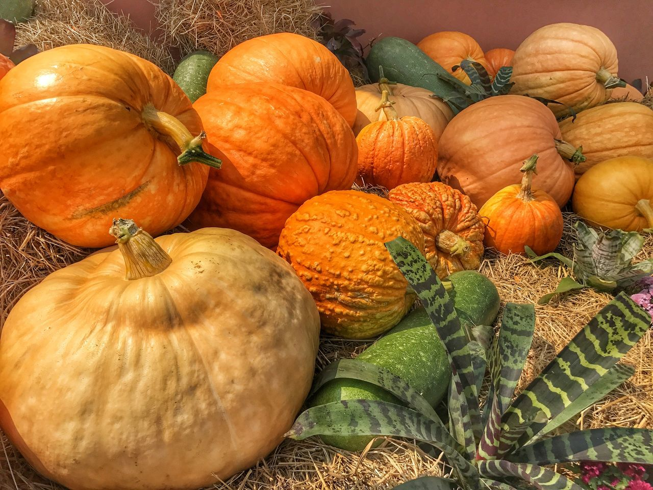 Big Pumpkins Vegetable Fruit Healthy Eating Nature Pumkin Freshness Orange Color Outdoors Close-up Day