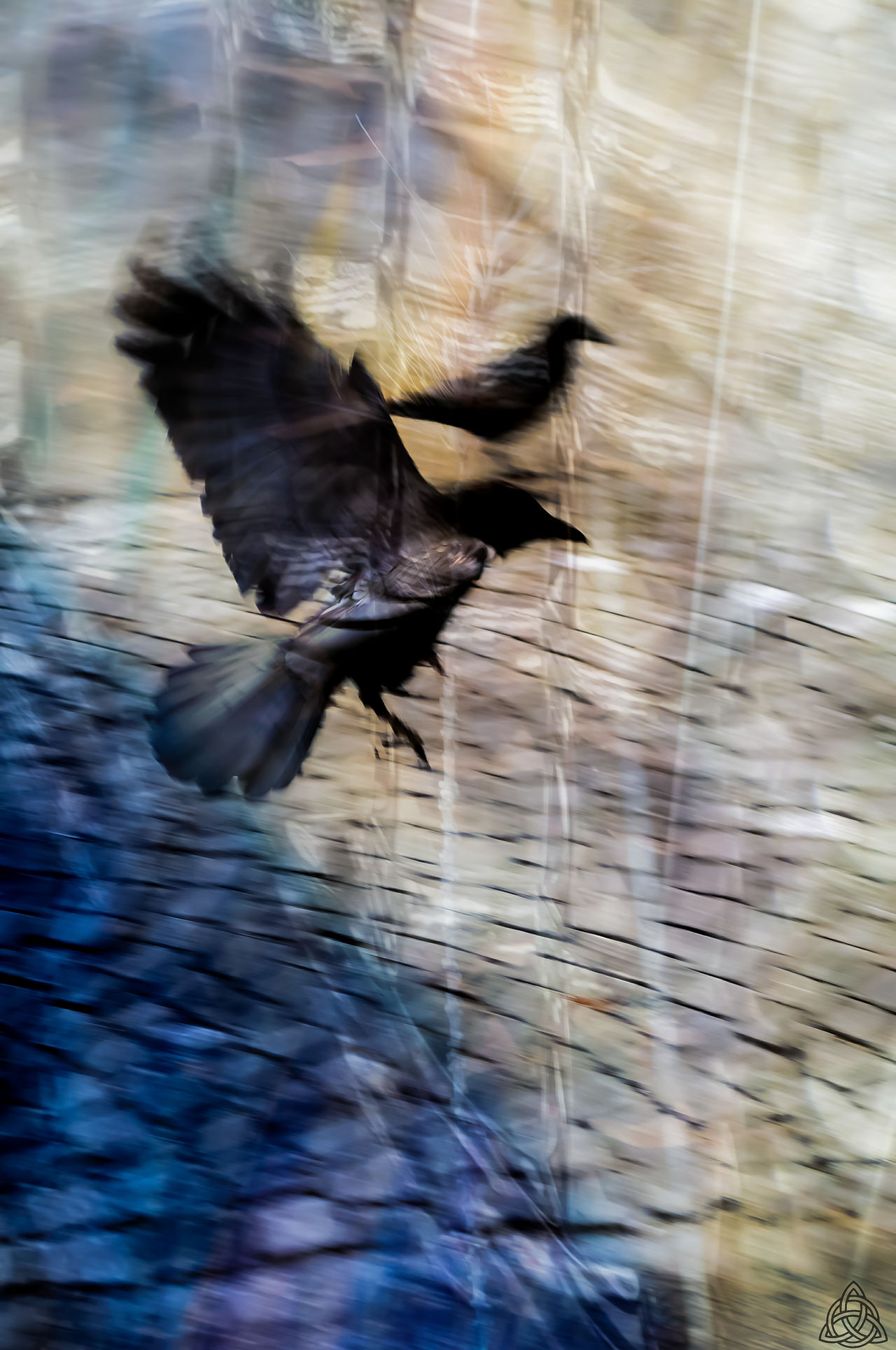 Black birds... Flying Bird Animal Themes Outdoors Motion No People Nature Nature EyeEm Masterclass Eyemphotography Eyembestpics EyeEm Best Shots Eyeemphoto EyeEm Market © Blurred Motion Eyem Collection Lausanne, Switzerland Multi Colored Eyem Best Shots EyeEm Gallery EyeEm Best Edits Ravens Nation Ravens Eyem Blur