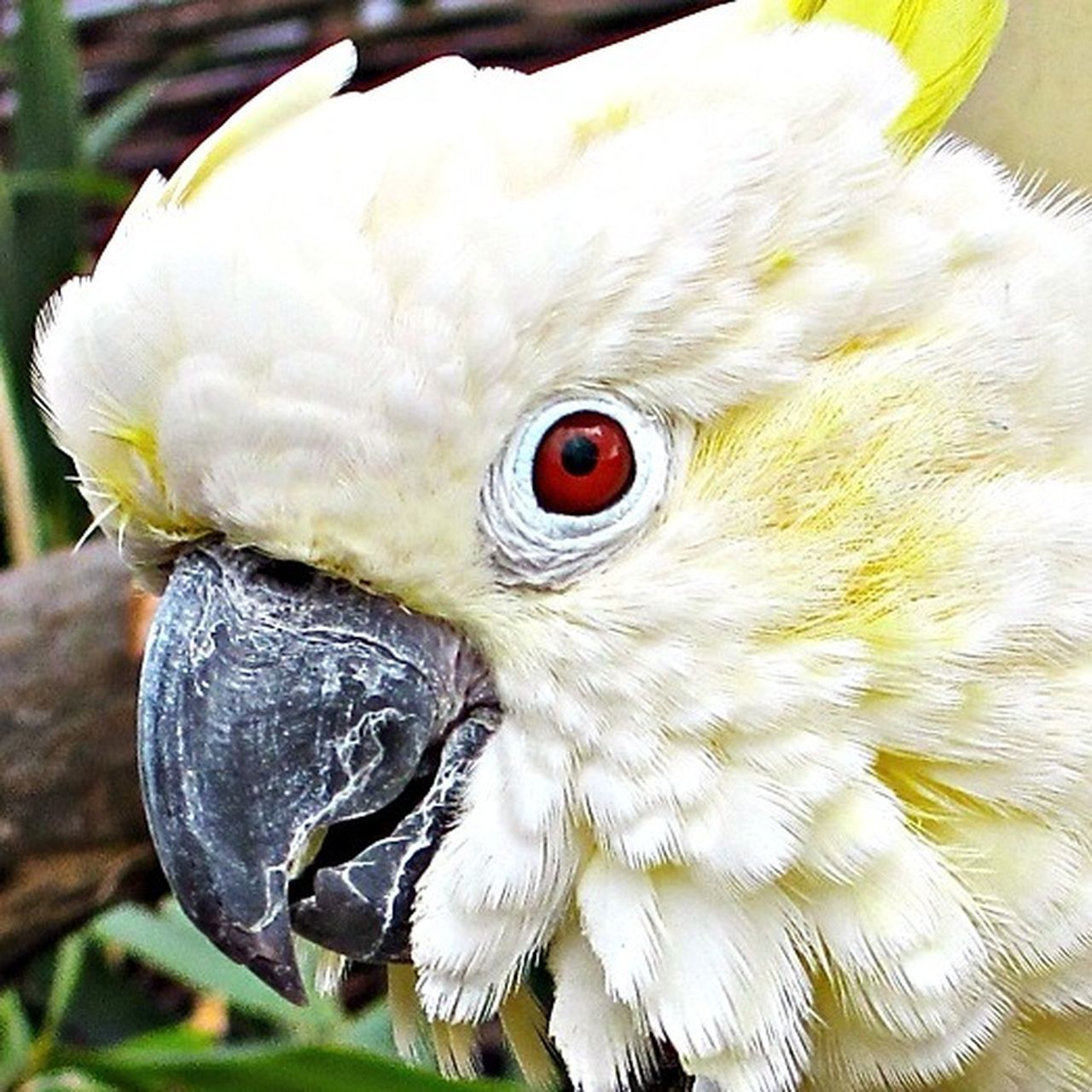 bird, close-up, beak, parrot, one animal, outdoors, portrait, cockatoo, day, no people, nature, animal themes, macaw