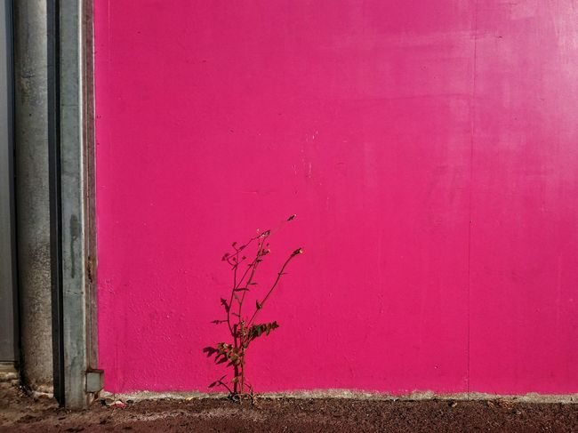 TakeoverContrast Red Wall - Building Feature Closed Door Plant Growth Weathered Day Outdoors Tranquility Nature No People Vibrant Color Red Color Tranquil Scene