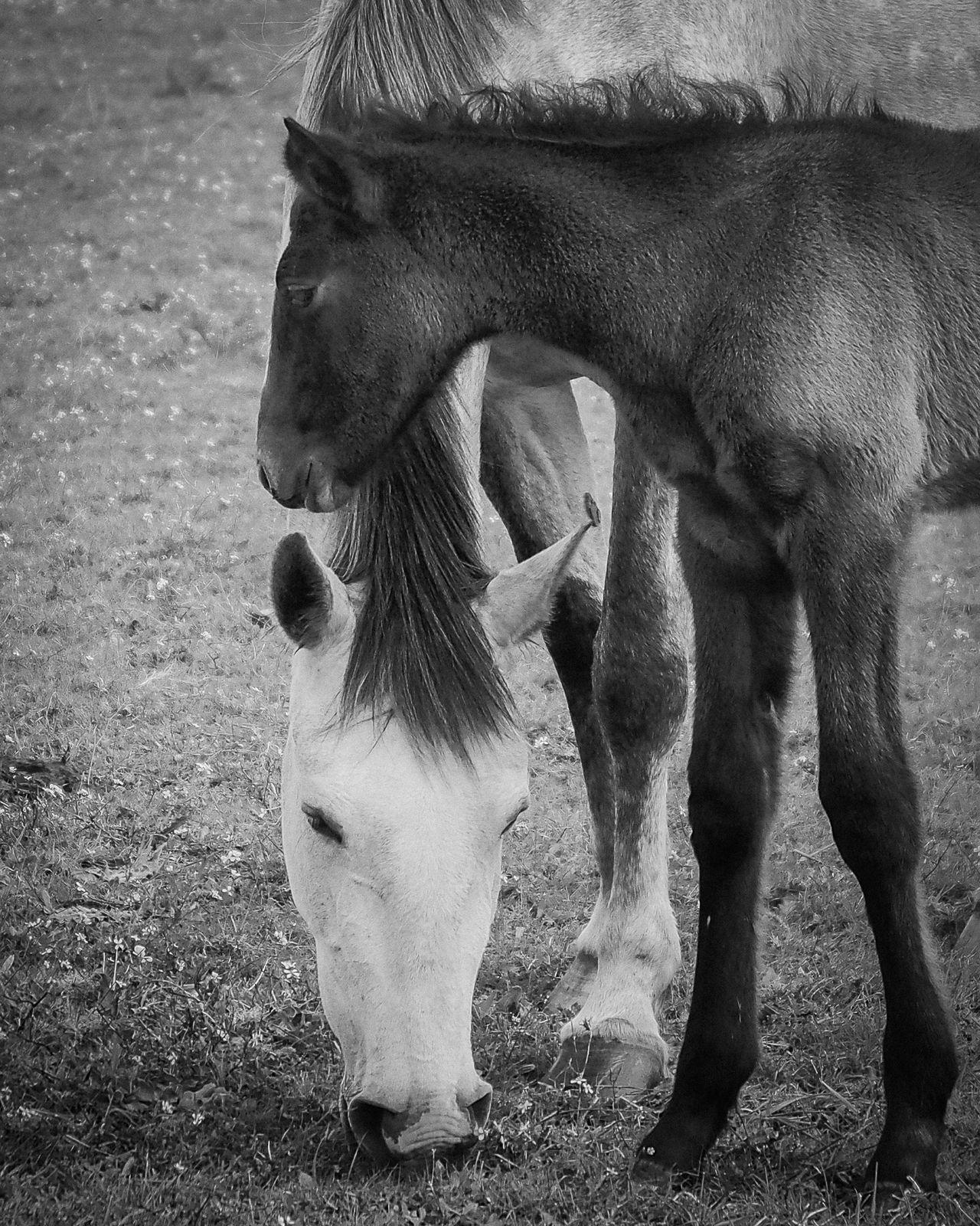 Alentejo Blackandwhite Countryside Getting Inspired GoingOut Horse Mirrorless Nature Omdem5 Outdoors Portugal Portugaldenorteasul Terapy Évora