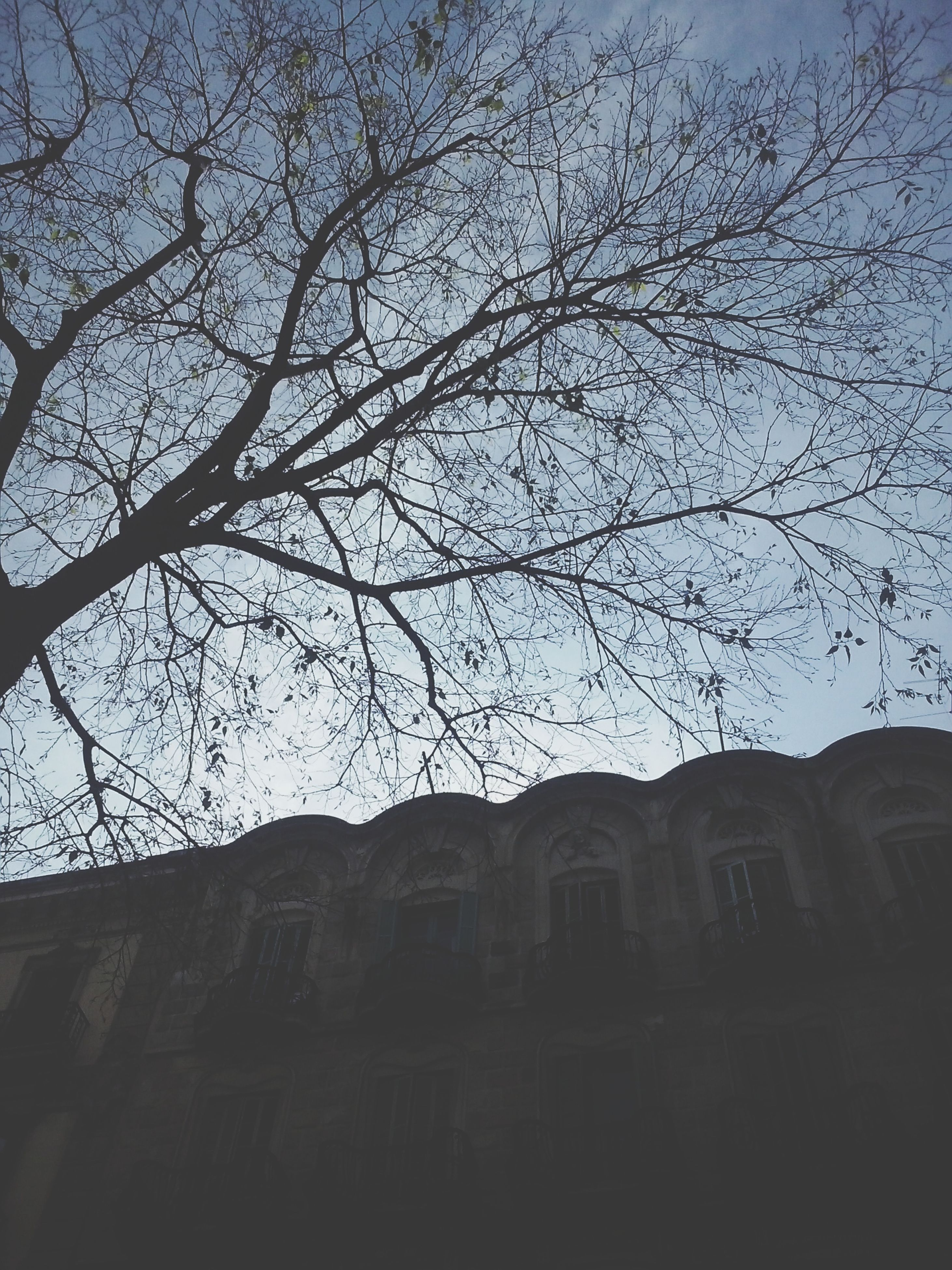 low angle view, architecture, building exterior, built structure, tree, branch, bare tree, sky, silhouette, building, clear sky, residential building, outdoors, no people, residential structure, city, day, window, growth, house