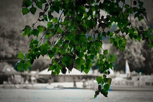 Taking Photos Enjoying Life Love To Take Photos ❤ Htcphotography EyeEm Best Shots - Nature Followme Beautiful Nature