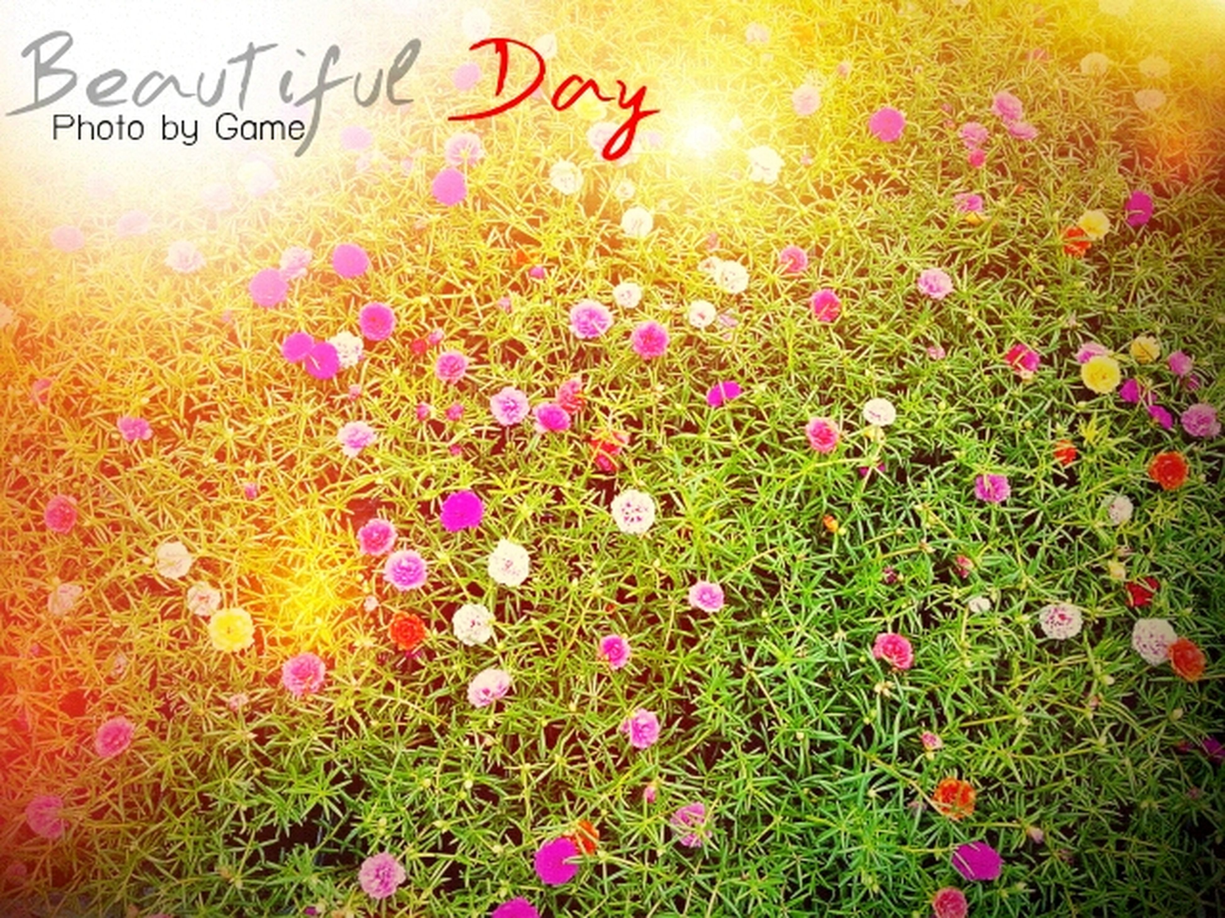 flower, freshness, field, growth, plant, beauty in nature, grass, fragility, nature, petal, multi colored, blooming, text, pink color, high angle view, flower head, no people, day, outdoors, western script