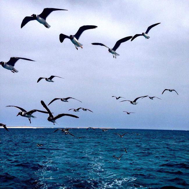 Sea And Sky Bird Photography Taking Photos Enjoying Life Relaxing Theredsea