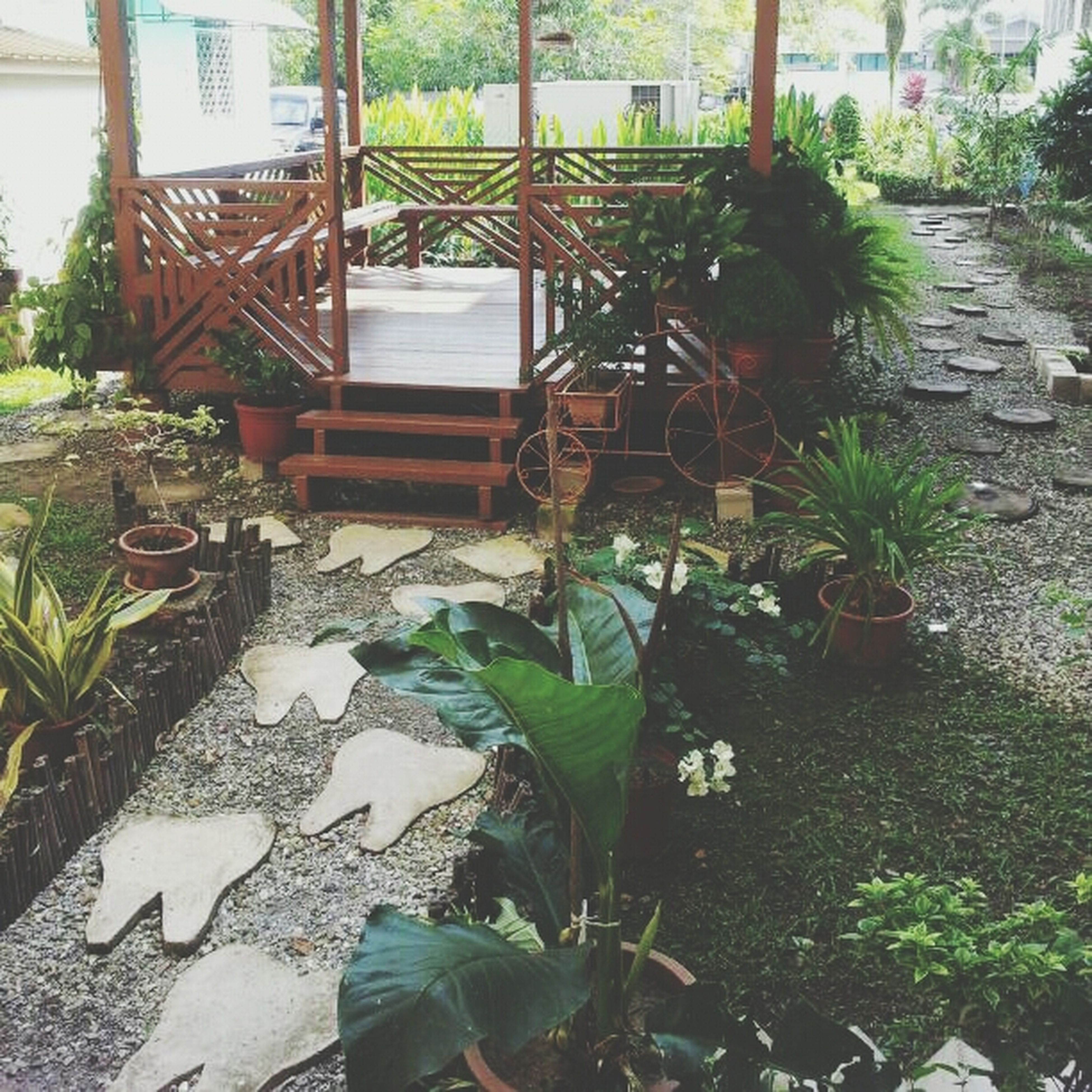 plant, leaf, potted plant, growth, green color, building exterior, built structure, front or back yard, architecture, house, day, sunlight, outdoors, nature, growing, tree, lawn, no people, high angle view, footpath