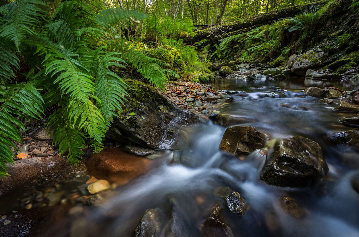 Beauty In Nature Day Fern Forest Forest Photography Fort William, Long Exposure Moss Motion Nature No People Outdoors Rivwr Rock - Object Scenics Scotland Sky Tranquil Scene Tranquility Tree Water