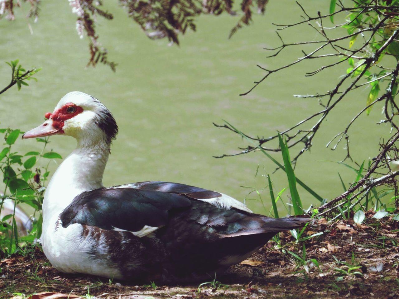 Lagonegro Gramado Brasil Travel Pic Bestoftheday Zoom Canon Bird Nature Water