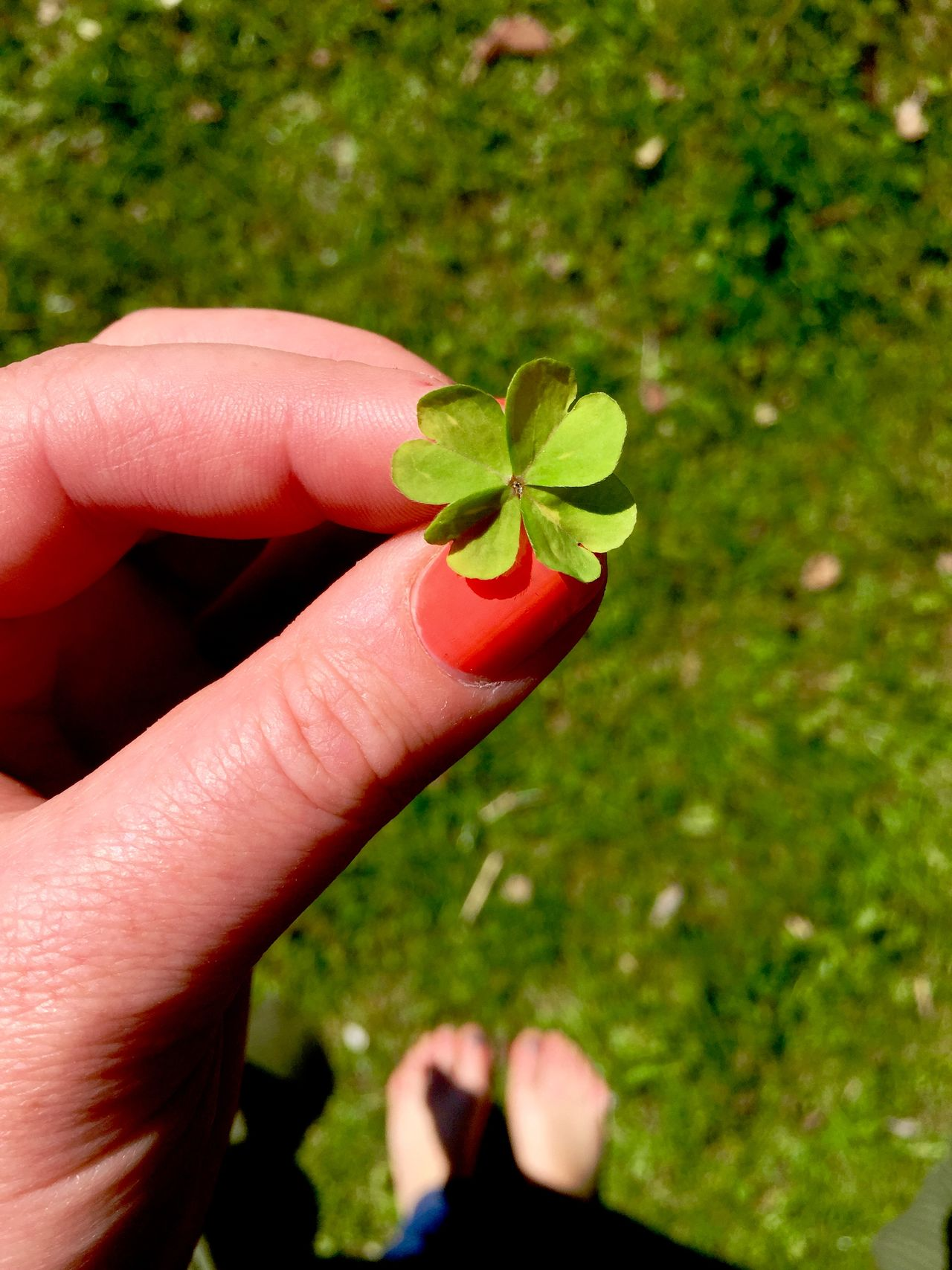Beauty In Nature Close-up Clover Day Four Leaf Clover Fragility Freshness Good Luck Charm Grass Growth Holding Hope Human Body Part Human Finger Human Hand Leaf Luck Lucky Nature One Person Outdoors People Plant Real People Women