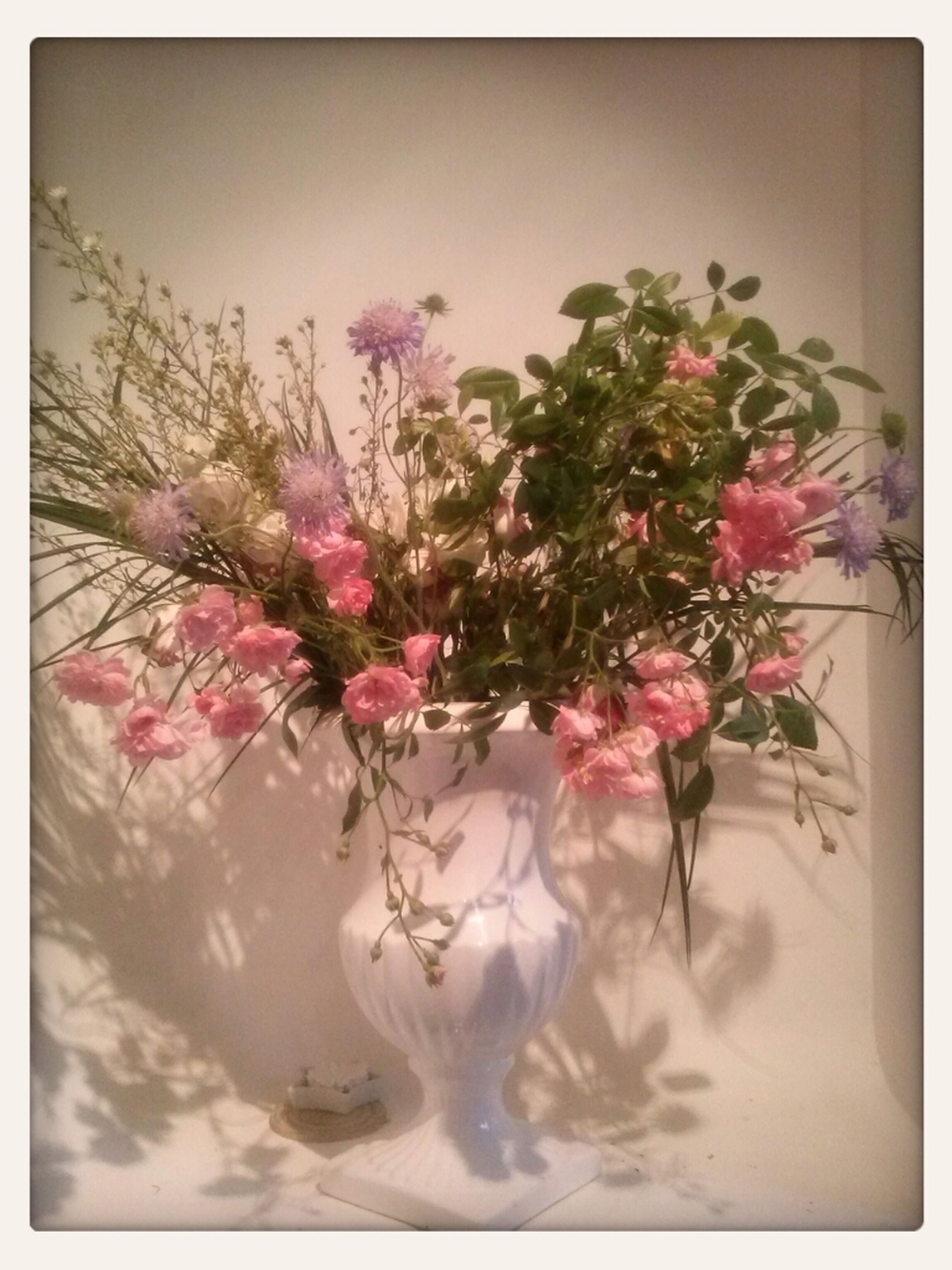 flower, freshness, transfer print, fragility, petal, auto post production filter, indoors, beauty in nature, growth, nature, flower head, pink color, close-up, vase, plant, blossom, bunch of flowers, in bloom, decoration, blooming