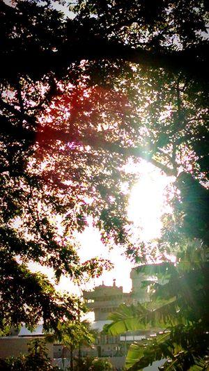 Battleship Missuori Tree Moody Sky Morning Light Leaves PearlHarbor74 WW2 Memorial