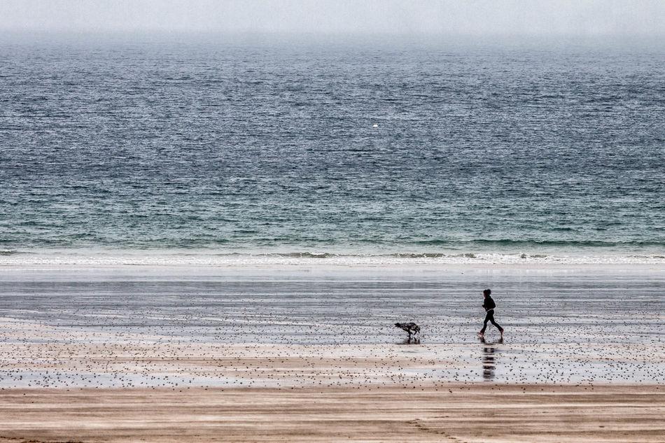 Beach Bretagne Bretagne France Bretagnetourisme Dog Horizon Over Water Lifestyles Nature Outdoors Peaceful Quiet Moments Relax Run Running Sand Sea Sky Water