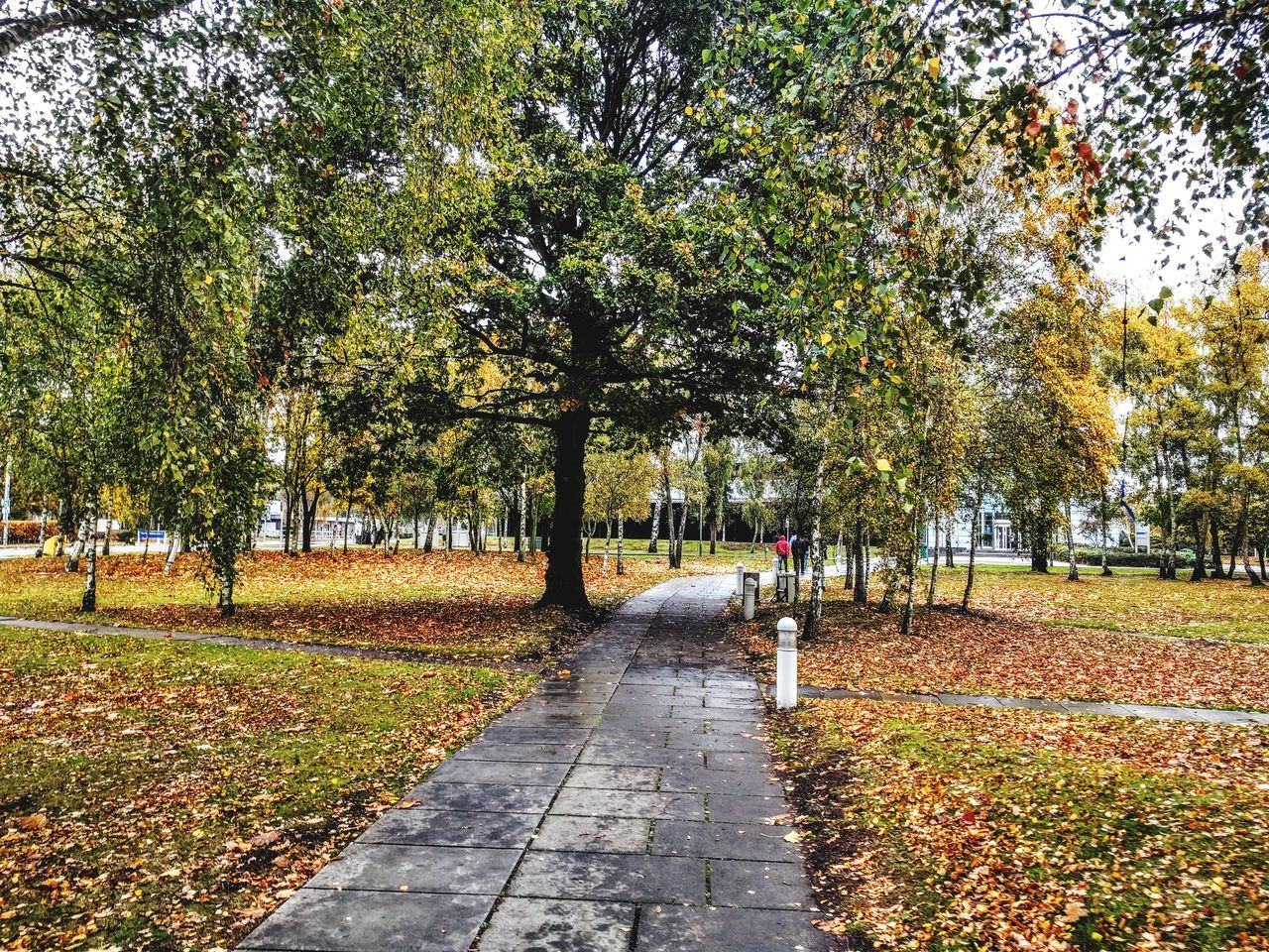 tree, autumn, leaf, change, nature, the way forward, day, outdoors, tranquility, beauty in nature, tranquil scene, scenics, growth, park - man made space, grass, no people, tree trunk, walkway, branch, sky