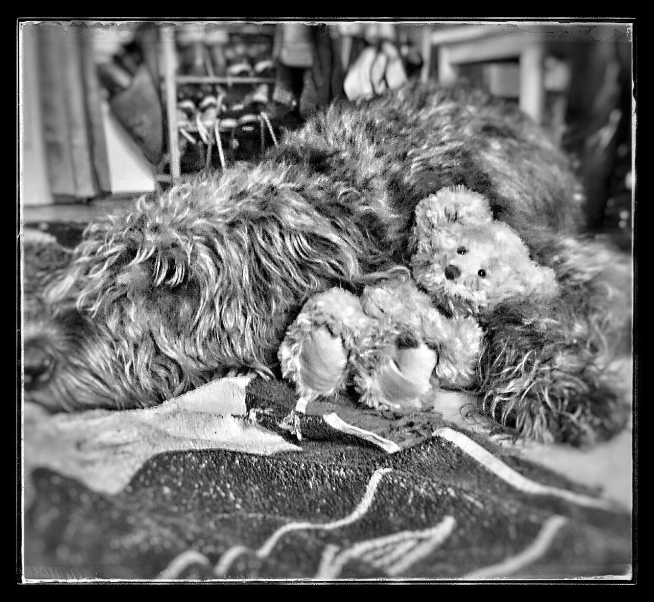 auto post production filter, animal themes, pets, domestic animals, animal, one animal, no people, cute, indoors, dog, mammal, close-up, young animal, day, bird