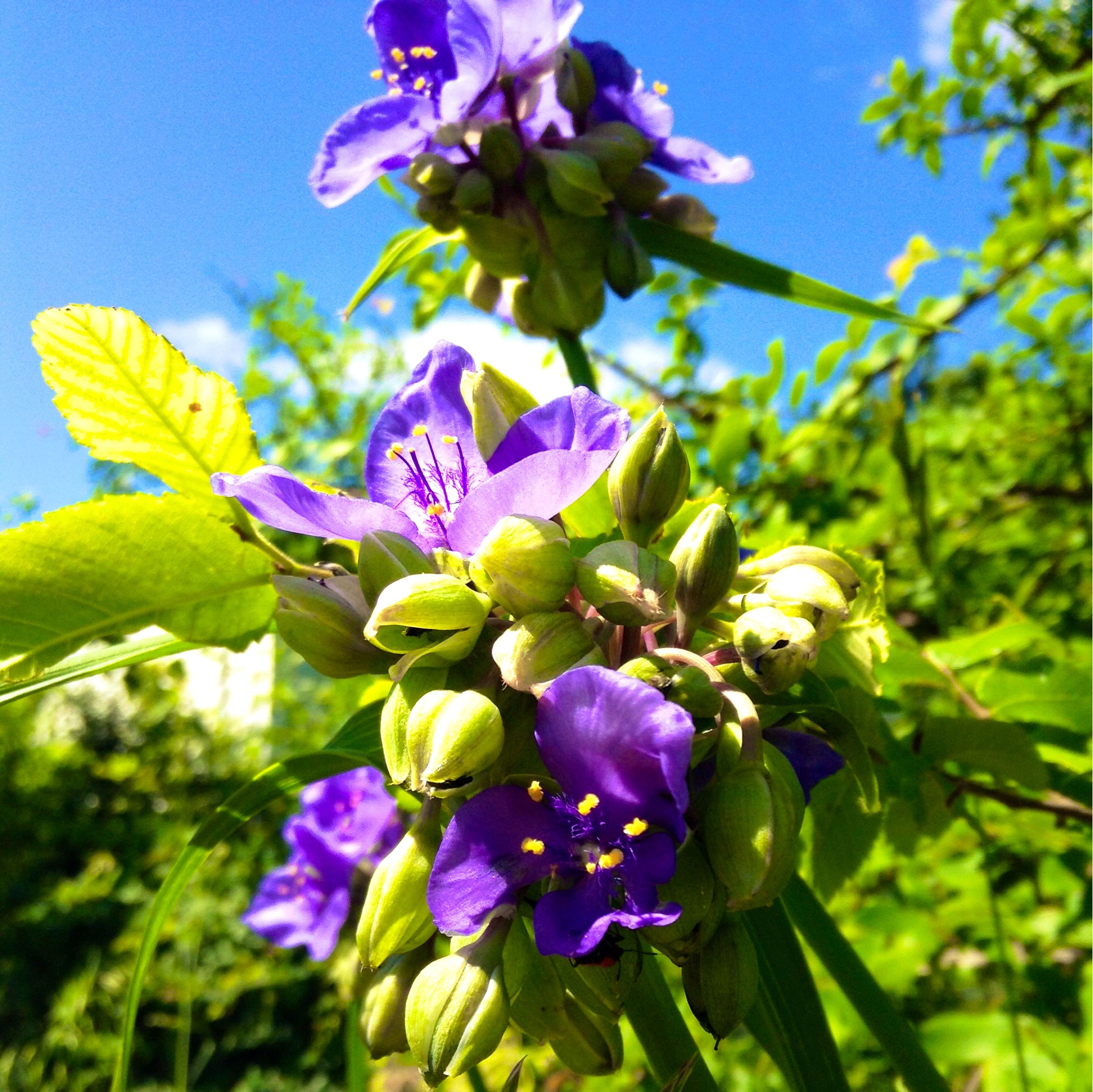 flower, freshness, growth, purple, fragility, petal, beauty in nature, blue, flower head, blooming, close-up, nature, focus on foreground, plant, in bloom, blossom, leaf, sunlight, stem, springtime